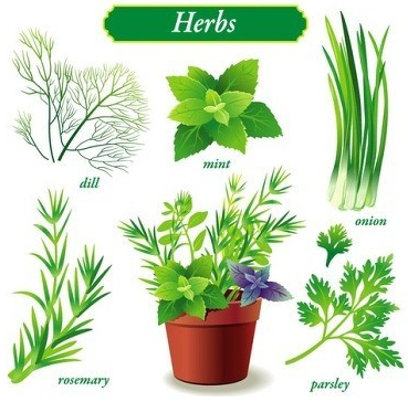 Plants for Your Container Garden Oh My Heartsie Girl